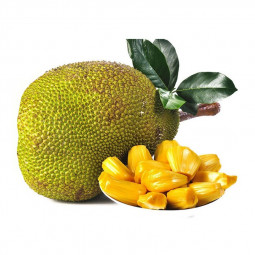 Fresh Indian Jackfruit